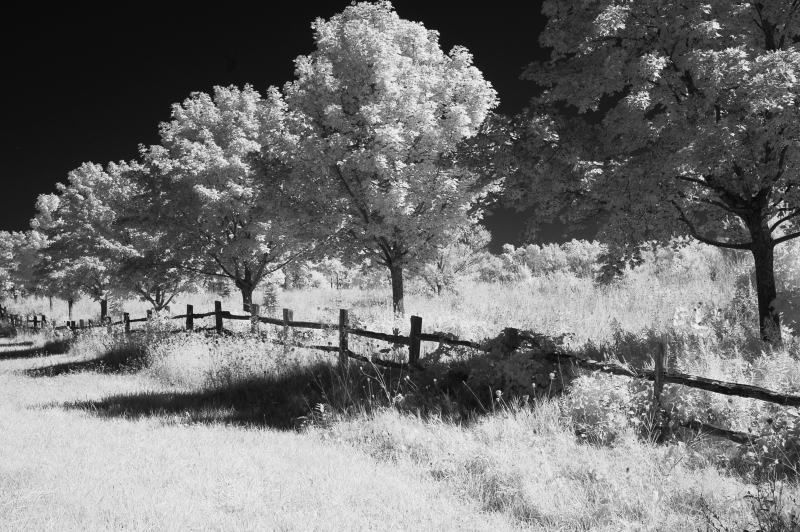 52 - Richard Wunsch | Lines | Infrared Photography -  15x13 | $125